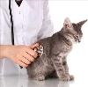 Ветеринарные клиники в Жирновске
